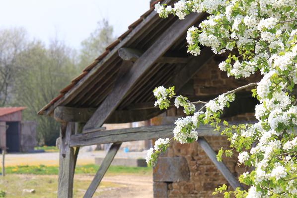 fleurs-charpente