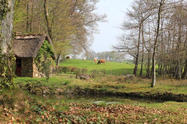 Vaches dans le Parc